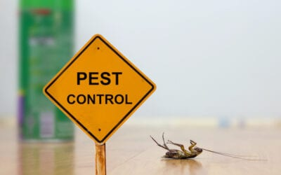 Pesky Pests: 4 Reasons Why Pest Control Is So Important
