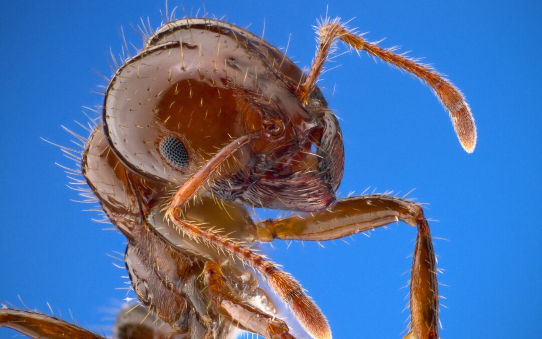 5 Methods for Keeping Fire Ants Out and Away From Your Home
