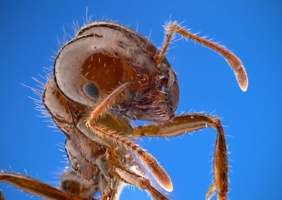 What Is the Best Way to Kill Fire Ants and Other Helpful Information