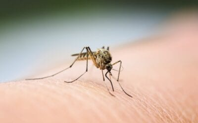 Different Types of Natural Mosquito Control