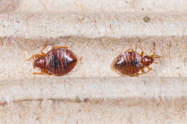 5 Early Signs of Bed Bugs You Need to Know About